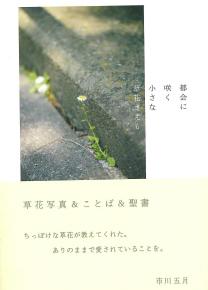 11  草花