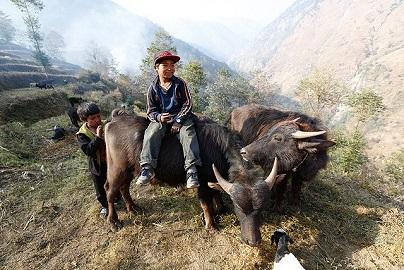 牛を飼い、牛と戯れるアシュバドルと弟ラルバドル。 (C) Bon Ishikawa